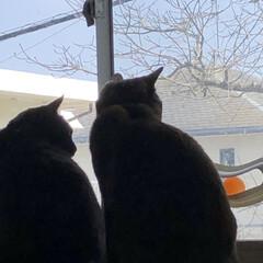 お昼ご飯/猫/くろ/にこ/黒猫/めん/... こんにちは😊 朝起きて何しようかなとか言…(8枚目)
