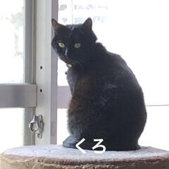 お昼ご飯/猫/くろ/にこ/黒猫/めん/... こんにちは😊 朝起きて何しようかなとか言…(1枚目)
