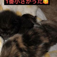 にこ/黒猫 face Bookに残ってた写真。改めて…(1枚目)