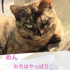 お昼ご飯/猫/くろ/にこ/黒猫/めん/... こんにちは😊 朝起きて何しようかなとか言…(6枚目)