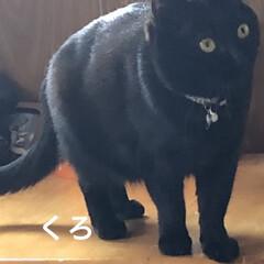 お昼ご飯/猫/くろ/にこ/黒猫/めん/... こんにちは😊 朝起きて何しようかなとか言…(9枚目)