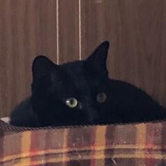お昼ご飯/猫/くろ/にこ/黒猫/めん/... こんにちは😊 朝起きて何しようかなとか言…(7枚目)