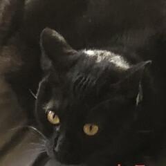 お昼ご飯/猫/くろ/にこ/黒猫/めん/... こんにちは😊 朝起きて何しようかなとか言…(3枚目)