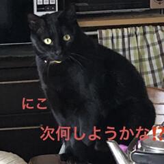 お昼ご飯/猫/くろ/にこ/黒猫/めん/... こんにちは😊 朝起きて何しようかなとか言…(5枚目)