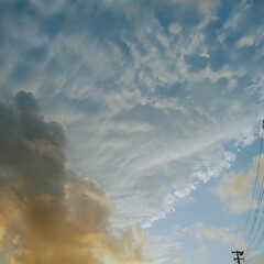 花/夕日 川沿いの土手に彼岸花が満開🤩🤩🤩 夕日が…(2枚目)