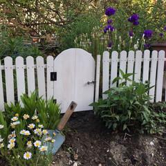 ガーデンフェンスDIY/DIY/ガーデン/ドアDIY 今日のDIY。2週間前に作ったフェンスに…