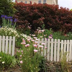ガーデンフェンスDIY/ガーデン/100均/スノコ/生活の知恵/DIY/... ガーデンフェンスを作ってみた。 経年劣化…