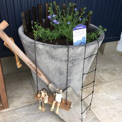 小ちゃい私のガーデン/DIY/ハンドメイド/生活の知恵/ガーデンピックDIY/100均/... 昨日のガーデンピックに引き続き、お花が咲…