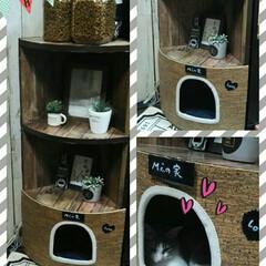 猫と暮らす ペット共生/コーナーラック/ベット/キャット/猫/ネコ/... 置場所に悩んでいたコーナーラックを利用し…
