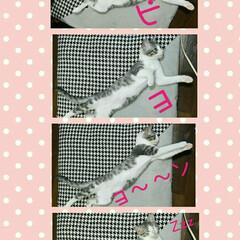 猫/かわいい/キャット/ペット