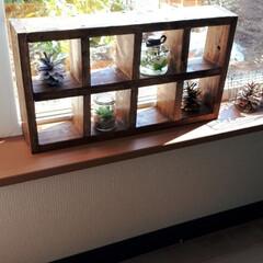 バニーテール/飾り棚DIY/窓辺のインテリア 端材が余ってたので、飾り棚作りました。以…