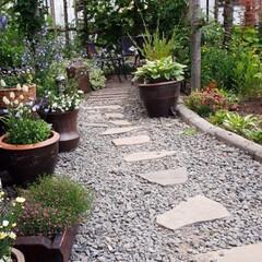 家庭菜園/我が家の庭 我が家の庭と畑です。 最近全く雨が降らな…(1枚目)
