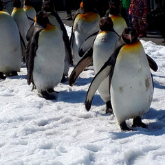 カピバラさん/きりん/猿山/ホッキョクギツネ/アザラシ/ペンギンの散歩/... 娘と何年かぶりに動物園に行って来ました。…