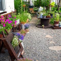 シジュウカラ/巣箱/我が家の庭 我が家の庭です。  今年飾りのつもりで取…