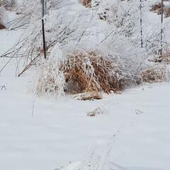 私の散歩コース/冬の風景/アスパラ畑 いつものウォーキングの道です。道路は堤防…(2枚目)