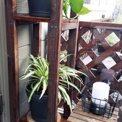 ポトス/オリヅルラン/花台/DIY 花台作りました。玄関フードが狭いので細長…