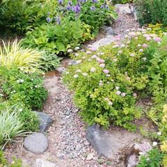 家庭菜園/我が家の庭 我が家の庭と畑です。 最近全く雨が降らな…(4枚目)