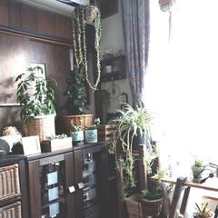 観葉植物/ゲーム/ニンテンドースイッチ 外は雪なので家のグリーンに癒されてます😊…