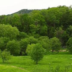 しらねあおい/ヒトリシズカ/私の散歩コース 庭の花たちと散歩コースのphotoです。 (4枚目)