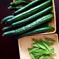 庭の花/いんげん/きゅうり/トマト/家庭菜園 家庭菜園の野菜 美味しく食べてます💕  …