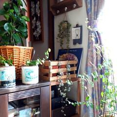 窓際インテリア/絵本/雑貨/観葉植物/100均/DIY 窓際の植物たち☺