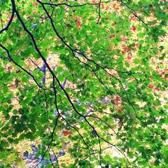 忠別ダム/旦那とドライブ/就実の丘/柱状節理/羽衣の滝/旭岳温泉/... 紅葉を見にドライブです。 天人峡、旭岳、…