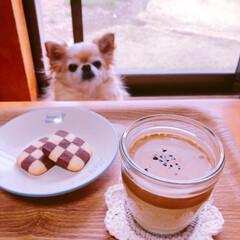ダルゴナコーヒー/おうちカフェ 初のダルゴナコーヒー作って愛犬とおうちカ…(1枚目)