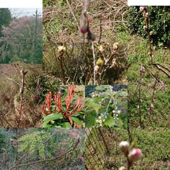 果樹/庭木/家庭菜園/桜 畑や庭の植木や果樹 梨(幸水・豊水)、桃…(1枚目)