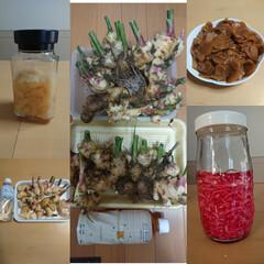 おうちごはん/家庭菜園 生姜がたくさん採れたので、ガリ、紅生姜、…