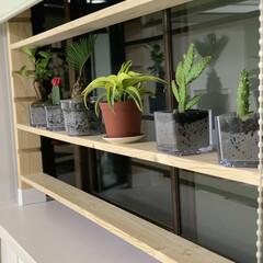 多肉植物/観葉植物/出窓/棚 無駄にしていた出窓を有効利用