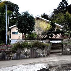 住まい/建築/テラス/植栽/ガーデニング/福祉施設/... 丘の上の小規模多機能福祉施設 テラスと木…