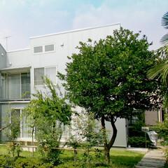 ガルバリュウム鋼板/外構/ガーデニング/玄関/ポーチ/天然石/... 中庭と木薫る家 外観はガルバリュウム鋼板…