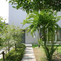 植栽/タイル/天然石/アプローチ/外構/ガーデニング/... 中庭を囲む緑あふれる家 緑のトンネルアプ…