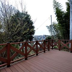 テラス/中庭/植栽/福祉施設/建築/住まい/... 丘の上の小規模多機能福祉施設 自然と街並…