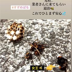 スズメバチ/蜂/駆除/退治/一安心 スズメバチ🐝に 恨みはありませんが… 自…