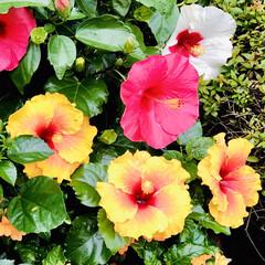 Flower 🌈🍉🌴🌺🐠  今日の帰り中〜👀💕 🦩まだ…