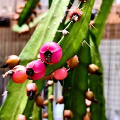 お散歩ガーデン/Flower 🌈🌺🌴🏖🌻  🦩仕事先に生えてたサボテン…