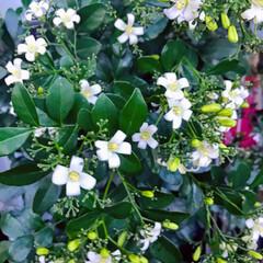 ベランダガーデン/Flower 🌈🌻🌺🌴🏖こんにちは(*ˊᵕˋ*)です …