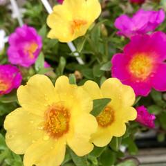 Flower/お散歩ガーデン 🌈🌻🌺🌴🏖  キャンディ🍬💕🍭🍬🍭🍬🍭🍬…