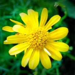 ベランダガーデン 🌈🌺🌴🏖  🌈✨明るい黄色で元気٩(。•…