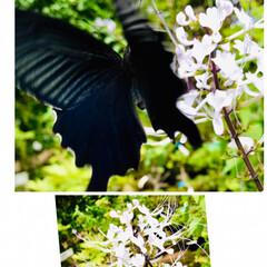 動物/Flower 🌈🍉🌴🍉🌴  🌼を📷🌈撮ろうとしたら🦋が…