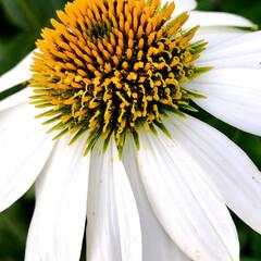 Flower 🌈🍉🌴🌺🐠  ٩(*´︶`*)۶おはよ〜…