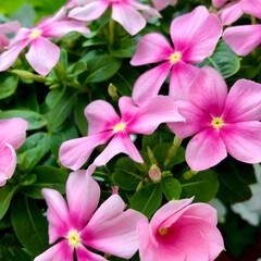 Flower 🌈🍉🌴🌺🐠  🦩🍃少しづつ色の変化があっ…