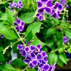 Flower 🌈🍉🌴🌺🐠 🦩白いふちどりがkawaii…