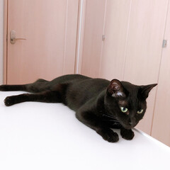 黒猫/ハチワレ猫 おはようございます😊 毎週土日はゆっくり…(2枚目)