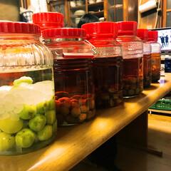 コレクション/梅/インテリア/キッチン/グルメ/ハンドメイド 歴代の梅酒たち。 今年も1つ追加😄