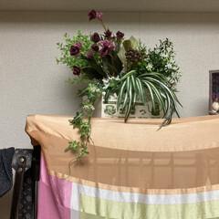 フェイクグリーン ドウダンツツジ 単品花材 H115   PRIMA(人工観葉、フェイクグリーン)を使ったクチコミ「衣装かけの上部の空間に、癒しの空間を作り…」(1枚目)