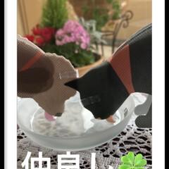 ラグジュランス加湿器アロマ 除菌プラス リフレッシュオレンジ 300mL | ウエキ(部屋用)を使ったクチコミ「加湿器アロマウオーター除菌plus も安…」(3枚目)