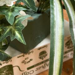 フェイクグリーン ドウダンツツジ 単品花材 H115   PRIMA(人工観葉、フェイクグリーン)を使ったクチコミ「衣装かけの上部の空間に、癒しの空間を作り…」(3枚目)