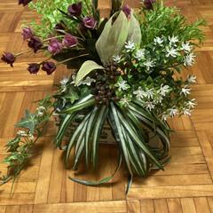 フェイクグリーン ドウダンツツジ 単品花材 H115   PRIMA(人工観葉、フェイクグリーン)を使ったクチコミ「衣装かけの上部の空間に、癒しの空間を作り…」(2枚目)